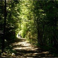 ходить через парк природы :: Jiří Valiska