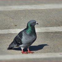 Я перехожу дорогу только на пешеходном переходе. :: Anatol Livtsov