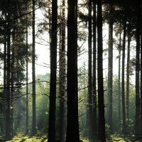 Утро в лесу :: Eduard Mezker