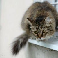 просто кошка во дворэ :: StudioRAK Ragozin Alexey