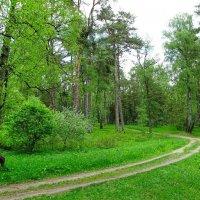 По лесной дороге :: Милешкин Владимир Алексеевич