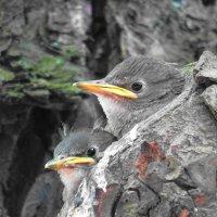 Птенчики в гнезде :: Маргарита Батырева
