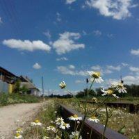 Рельсовые ромашки на фоне неба :: Андрей Баталов