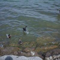 жители озера :: kuta75 оля оля