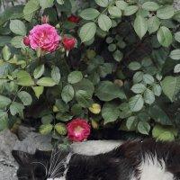 Коты умеют мечтать :: Юрий Гайворонский