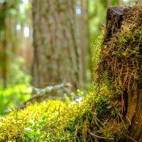 Красиво в лесу :: Дмитрий Колесников