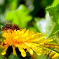 Кипит работа у пчелы. :: Валентина ツ ღ✿ღ