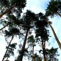 Лес и небо :: Надежда Смирнова