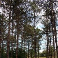 Forest :: Dmitriy Photo