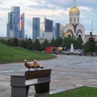 Уточки в парке Победы :: Юрий Мясников
