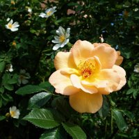 Оделся мир цветами. ... :: Galina Dzubina
