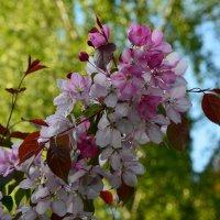 До свидания, весна! Здравствуй, лето! :: Ольга Русанова (olg-rusanowa2010)