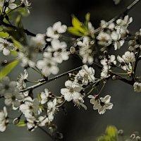 Холодный май :: Сергей Владимирович Егоров