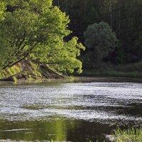 склоняясь над рекой :: оксана
