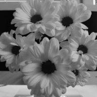 Белые хризантемы :: Олег Денисов