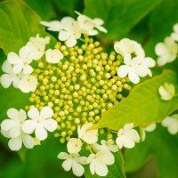 Калины цвет :: Елена Зудова