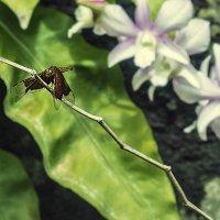 стрекоза и..орхидея :: Александр