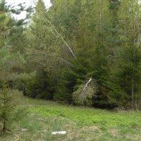 смешанный лес :: Михаил Жуковский
