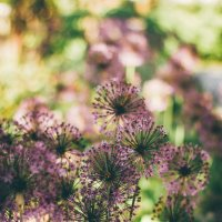 Flowers :: Алёна Найдёнова