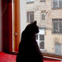 У окна... :: Анна Приходько