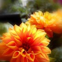 цветы.. :: Анна Приходько