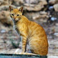 Кошки не похожи на людей, Кошки — это кошки. :: Александр Липовецкий