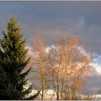 Северная красота. :: Марина Никулина