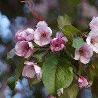 цветут сады :: Надежда