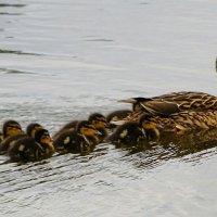 Урок плавания :: Милешкин Владимир Алексеевич