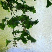 Веточка клёна на ветру :: Маргарита Батырева