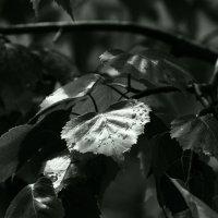 Эти  летние  дожди... :: Валерия  Полещикова