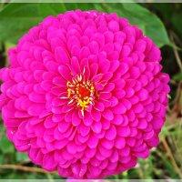 Летние цветы :: Veselina *