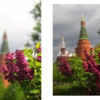 Александровский сад :: Татьяна Тимофеева