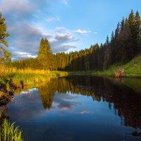 Еловый лес на берегу реки. :: Фёдор. Лашков