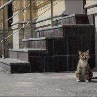 Чииииииз!) :: LudmilaV ***