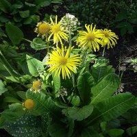 Отцветающие цветы не сразу теряют свою привлекательность :: Маргарита Батырева