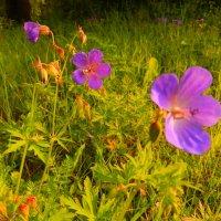 Цветы :: Юрий Николаев
