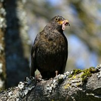 Пища для птенцов :: Милешкин Владимир Алексеевич