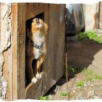 Собачки тоже умеют мечтать. :: Валентина ツ ღ✿ღ