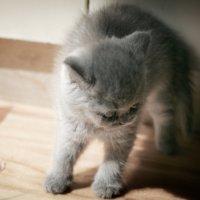 Не бесите меня! :: Кирилл Богомазов