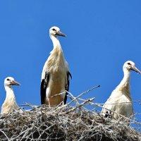 три богатыря :: linnud
