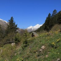 Начало лета в ущелье Адыл-Су. Приэльбрусье. Высота 2300 м. :: Vladimir 070549