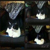 kitty on my chair :: maxim