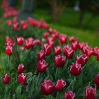 Летняя Весна vol.1 :: Anatoliy K.R