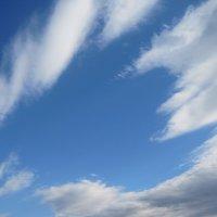 Облако - Лисенок :: Tatyana Kuchina