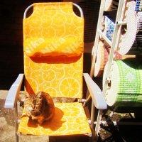Оставили сторожить, а охранник пригрелся на солнышке и заснул :: татьяна