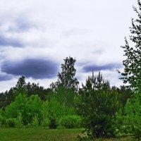 Лес дремучий - свинцовые тучи.. :: Vladimir Semenchukov
