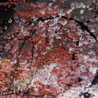 Нагоя Tsuruma Park :: Swetlana V