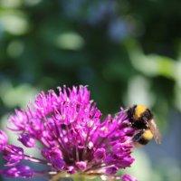 Пчелка :: Анастасия Рябкова