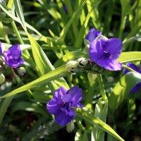 Необычные цветы: пусть они совсем малютки, в них есть чудо красоты. :: Валентина ツ ღ✿ღ